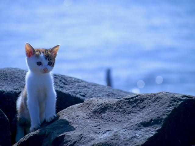 可愛い猫ちゃん_城南島海浜公園