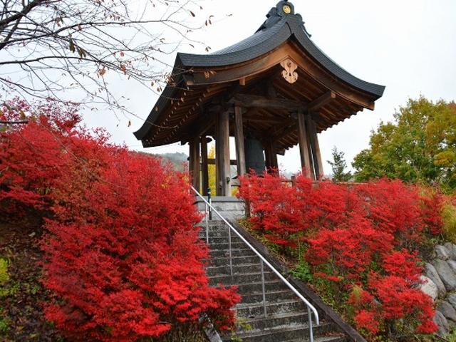 鐘楼の周りも真っ赤に紅葉で、いちばん赤くなってます_霊松寺