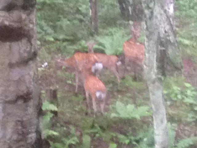 早朝、鹿に遭遇_蓼科温泉共同浴場
