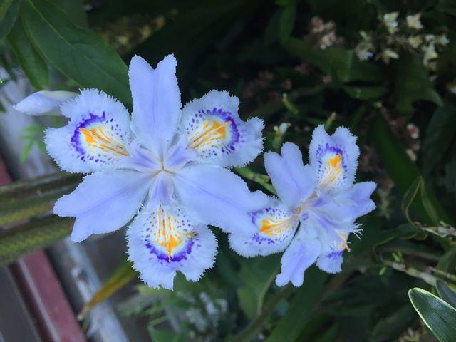 花の名前は解りませんが綺麗な花です。_神六山公園