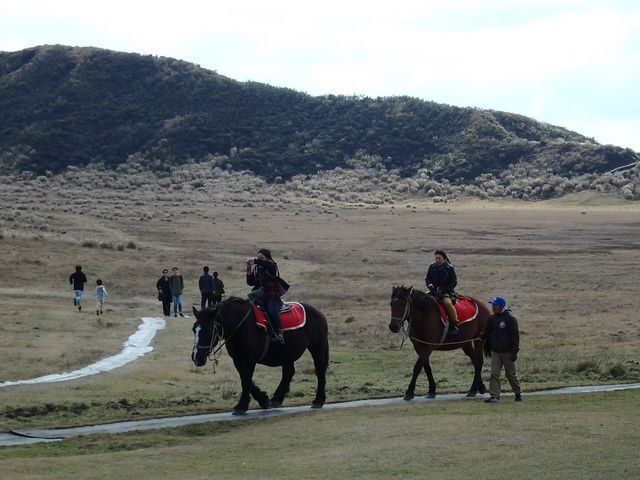 お馬さんに乗れます 5分1500円ですが自然の中のコースを歩くのでとても良かったです。_草千里展望所