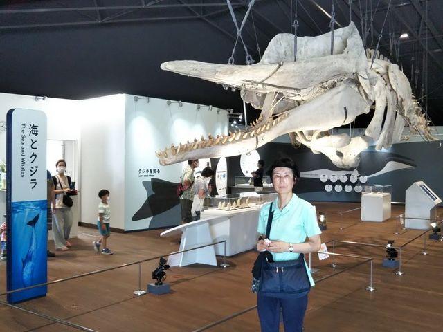 施設内ではクジラの骨格など昔同様の展示が行われている_おしかホエールランド