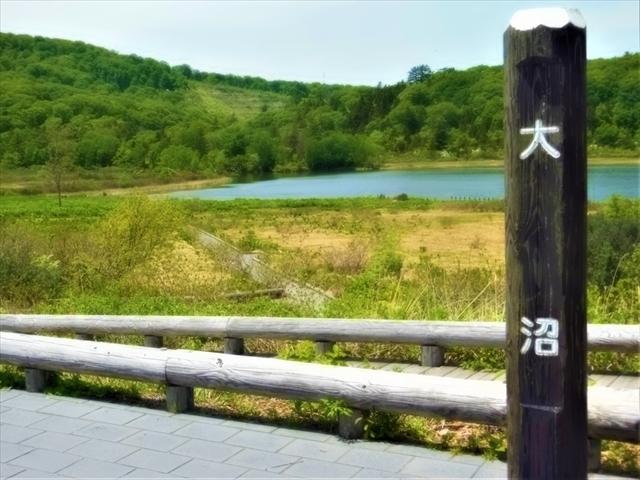 道路から見渡した「大沼」_八幡平大沼遊歩道