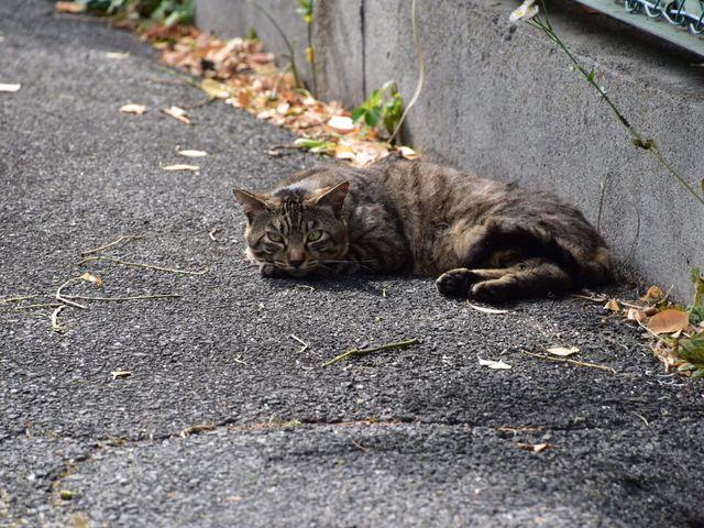 近くで寝そべるニャンコ_深志神社