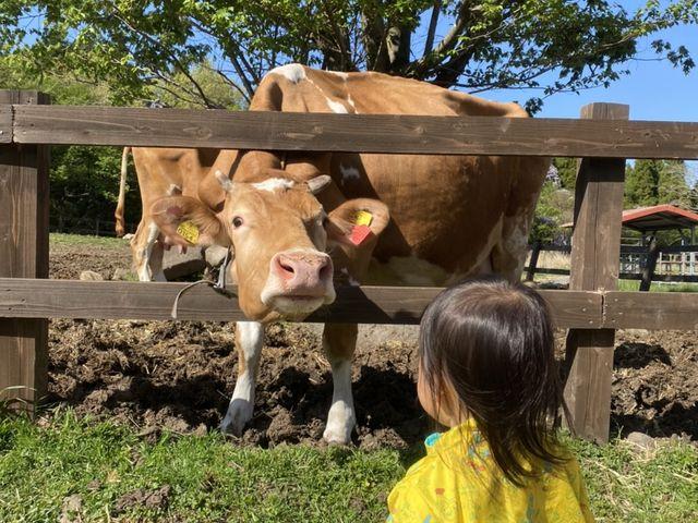 牛さんと女の子_ガンジーファーム