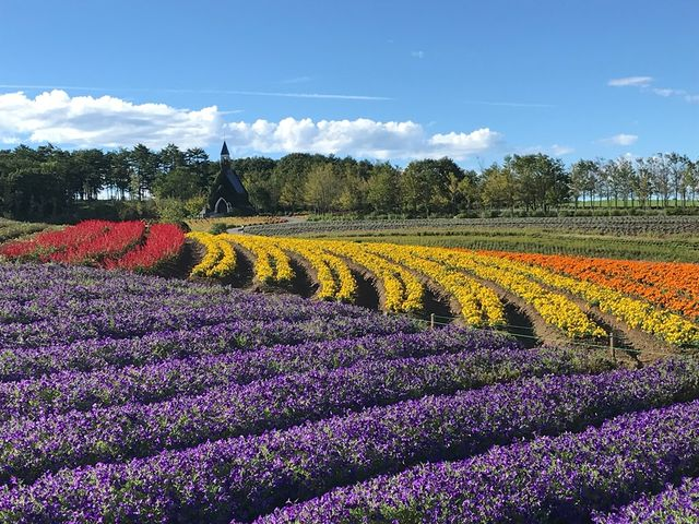 虹色の花畑(7月~10月上旬)_ひるがの高原 牧歌の里