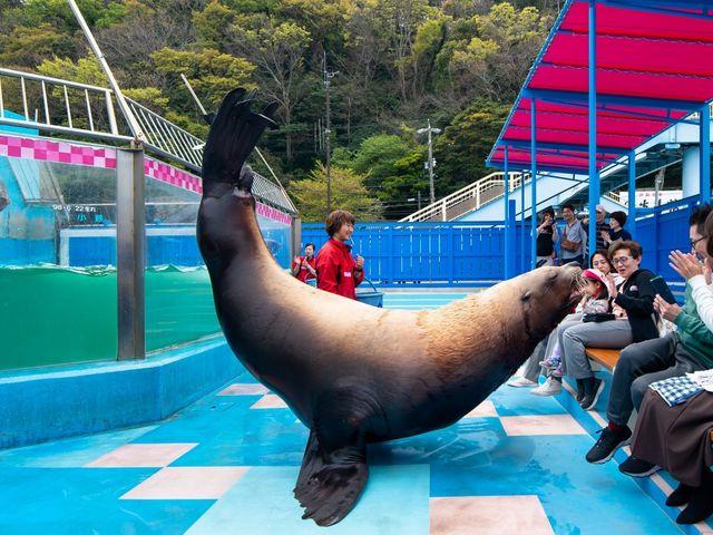 【距離感ゼロの衝撃が笑顔に】日本で一番近くでトドが見れる「夫婦トドタイム」はいつも大人気_伊勢夫婦岩ふれあい水族館(伊勢シーパラダイス)