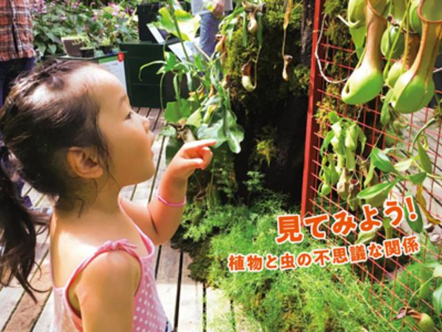 <夏のイベント> 食虫植物展 今年はウツボカズラやハエトリグサなどを展示_高知県立牧野植物園