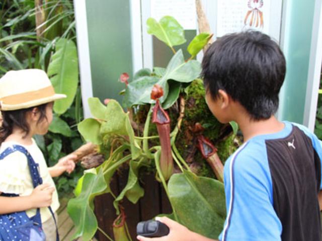 食虫植物展 自由研究にもおすすめ_高知県立牧野植物園