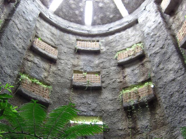 まるでジャングル!人気の温室は必見_高知県立牧野植物園