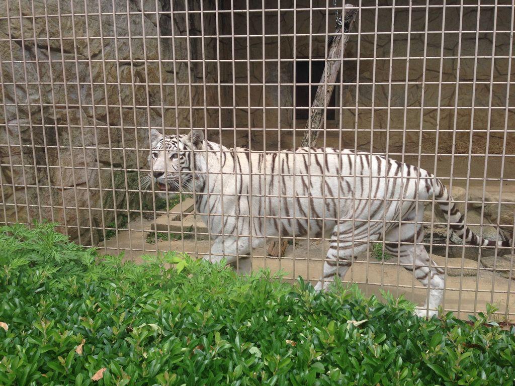 大牟田市動物園