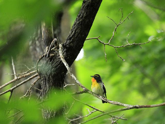 四季折々の野鳥たち。_(株)知床ネイチャーオフィス
