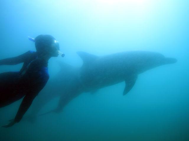 野生のイルカと泳ぐ夢が叶う場所_Dolphin Smile