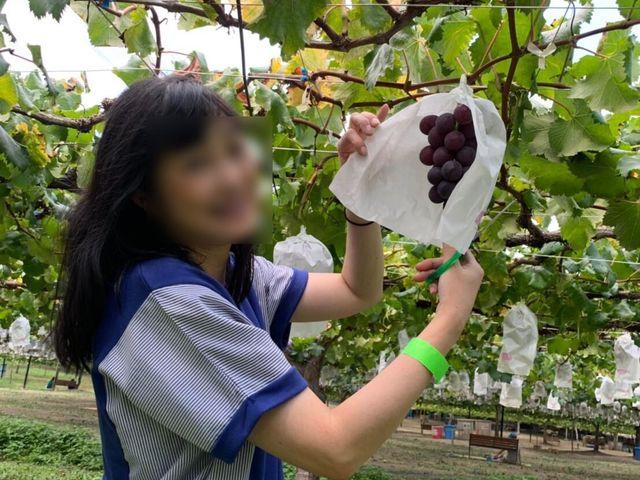 遊覧農場 ヤマナカ果園