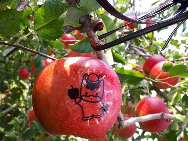このシールをはがすと ぐんまちゃんの絵がリンゴに写ってます。 園内には数個ありますから探して見てください_後藤りんご園