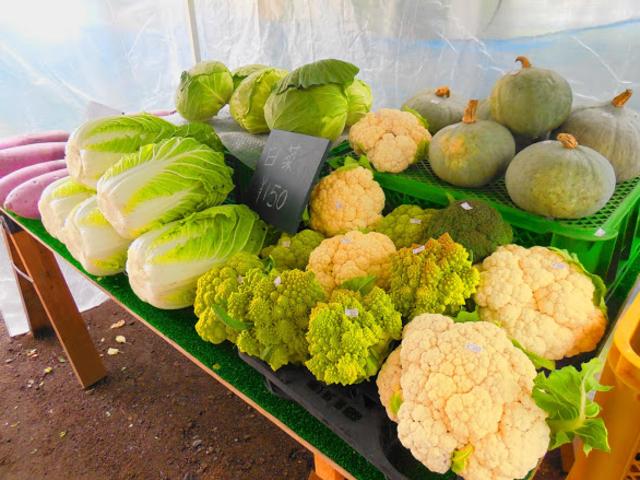 私たちが、育てた野菜 です。手前にある野菜はガリッコリーと言う 野菜です。 販売もしています。 _後藤りんご園