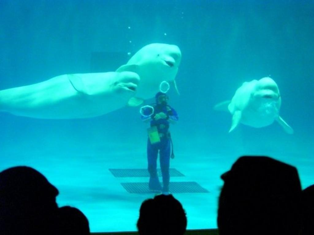 しまね海洋館アクアス