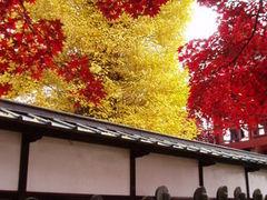 星見人さんの長円寺のセンダンバノボダイジュへの投稿写真1