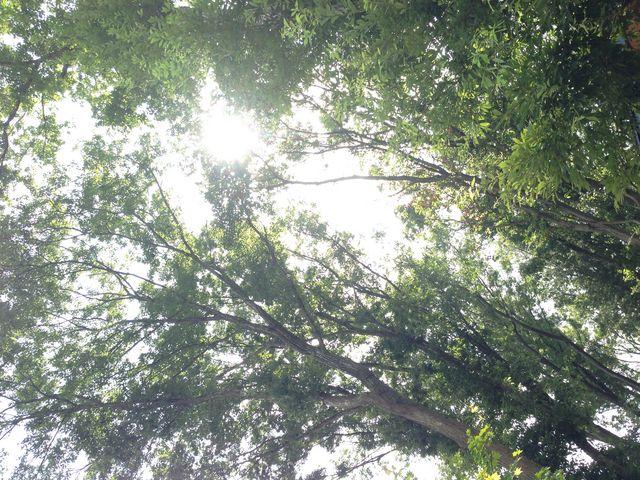緑豊かな木々に囲まれた所です。_陶芸体験教室 よこやま