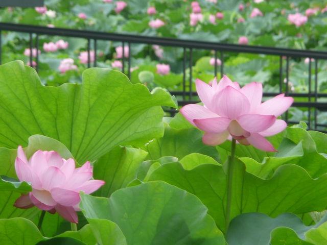 万博記念公園・日本庭園