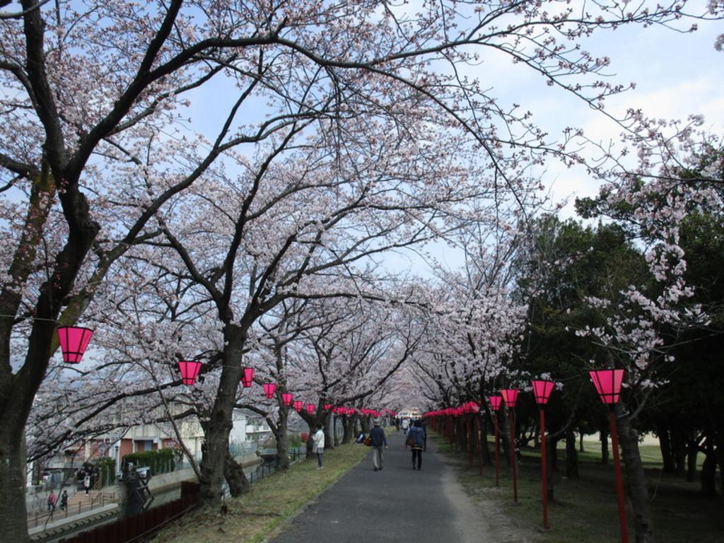 住吉堤防敷桜並木