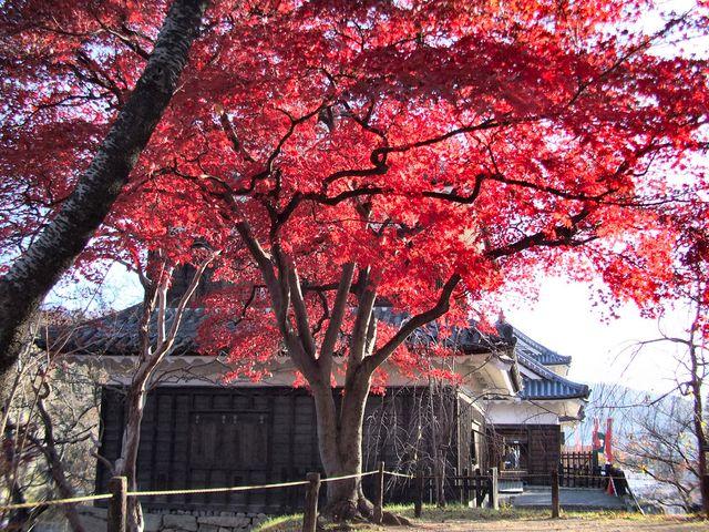 紅葉の上田城。 ケヤキ並木の紅葉の写真は探したけれどありませんでした。 今度、撮って来ます。_上田城跡公園