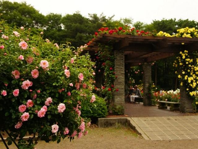 素敵なあずま屋もあります_井頭公園