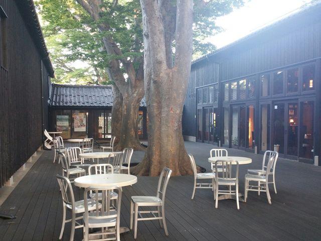倉庫内にあるカフェです。真ん中に大きな木があります。_山居倉庫