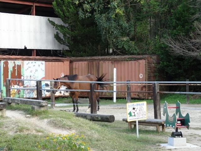 馬がいました_安富牧場 ファミーユ