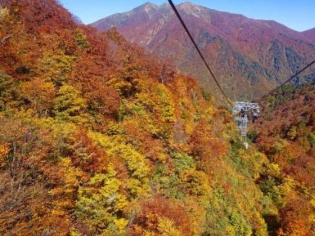 素晴らしい紅葉です。_谷川岳ロープウェイ