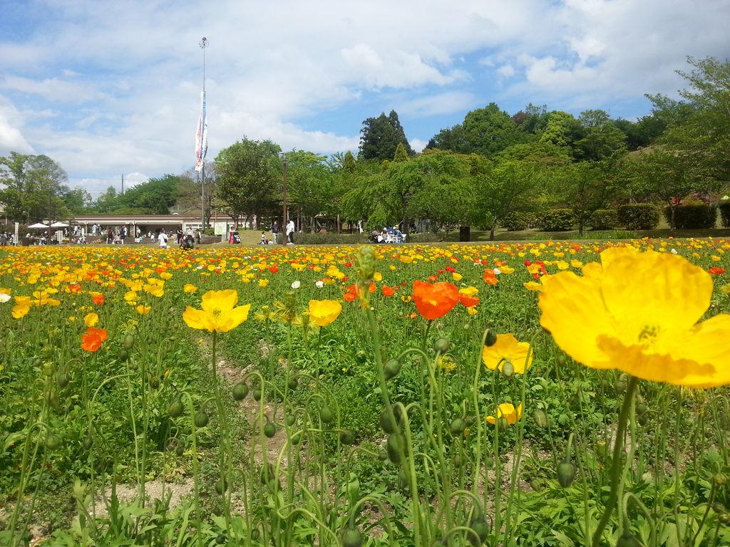 富田林市農業公園(サバーファーム)