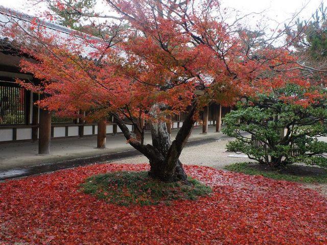 綺麗に色づく_法隆寺