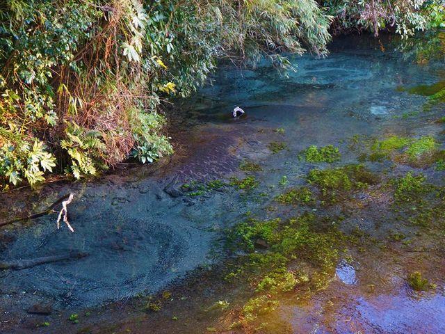 小さかった。鮮やかモードマックスでこの色になった_柿田川湧水群