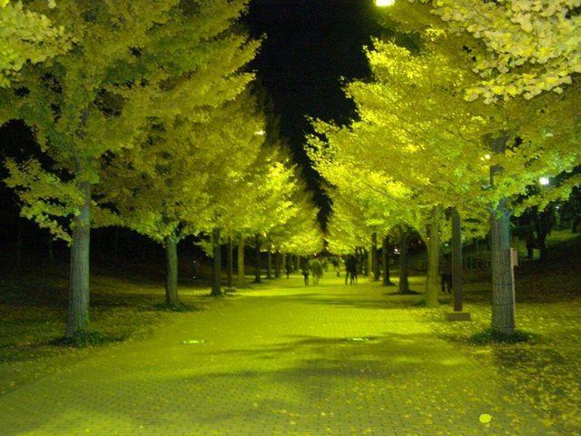 ライトアップがすてき_あづま総合運動公園