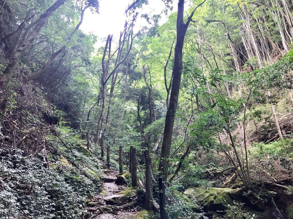 野河内渓谷自然歩道