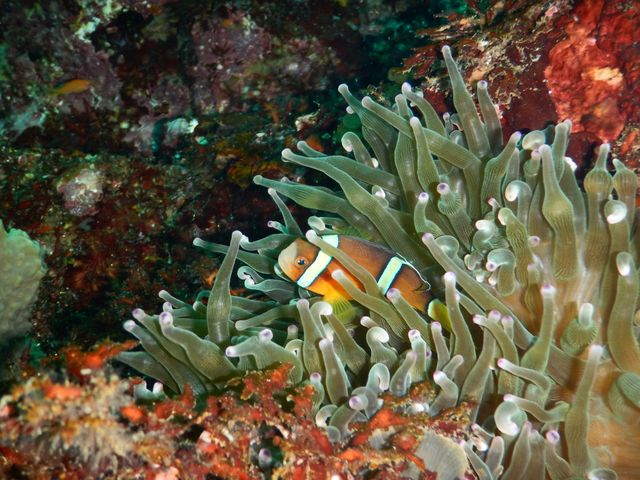 ニモ_clover diving service
