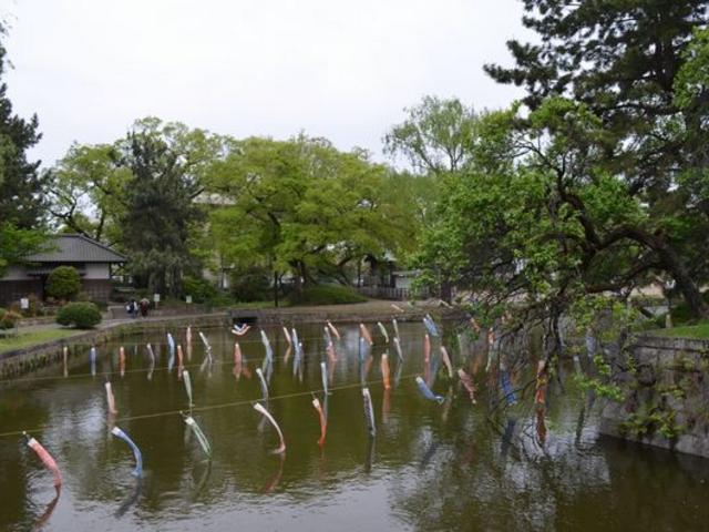 鯉のぼりがいっぱい_亀城公園