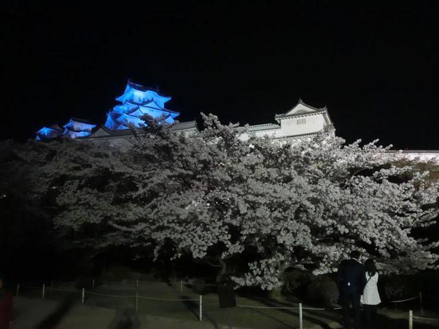姫路公園の夜桜です_姫路公園