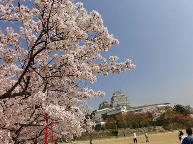 春爛漫です_姫路公園