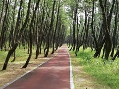 県立阿波岐原森林公園