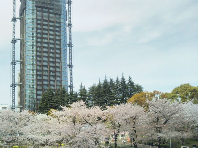 『東京ミッドタウンの桜並木』。_六本木