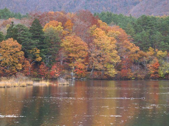沼2_観音沼森林公園