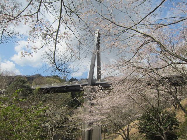 桜咲く松川湖つり橋には感激!_松川湖