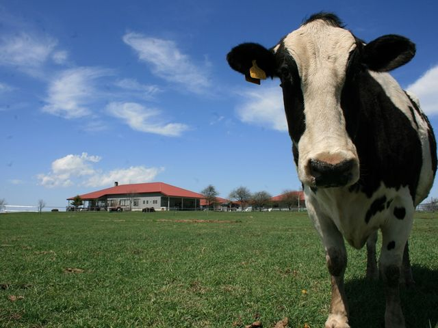 牛とレストハウス_長門牧場