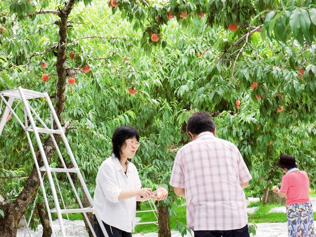 みちのく観光果樹園