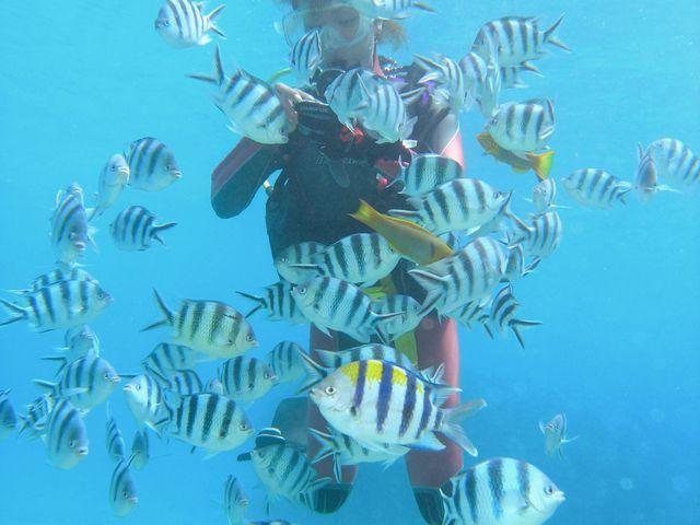 沖縄体験ダイビング 自由に泳げる体験ダイビングで他の体験ダイバーと差をつけろ!!_ダイビングサービスあいる・ぷまんどぅ
