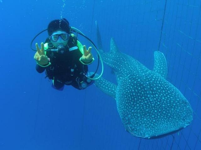 ジンベエザメとダイビングでこんなに近寄れる_ダイビングサービスあいる・ぷまんどぅ
