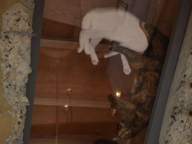 保護猫カフェ285