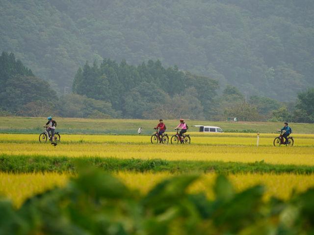 黄金色の田園地帯を抜ける秋のサイクリングツアー_北上巣箱