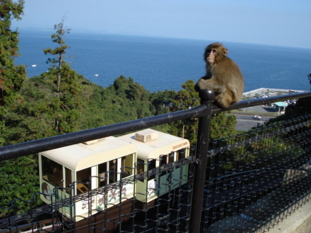 高崎山自然動物園さるっこレール
